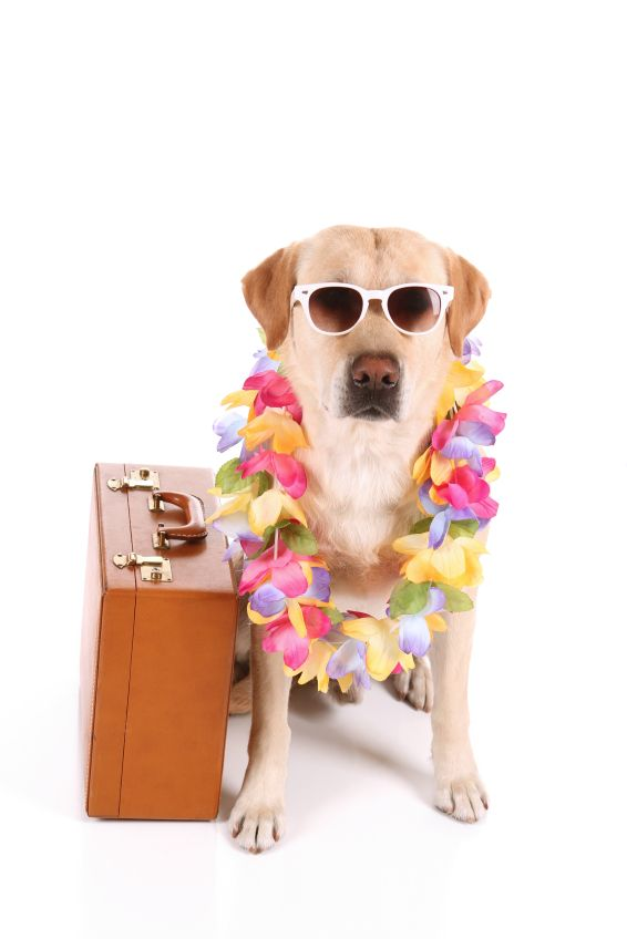 Pointe South Vacation Rentals Has Pet Friendly Resort Rooms Call