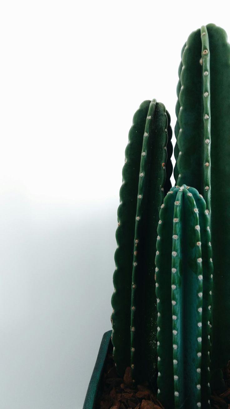 Das #Weiße # zu #Rungis #: #Der #Kaktus #! #darkiphonewallpaper