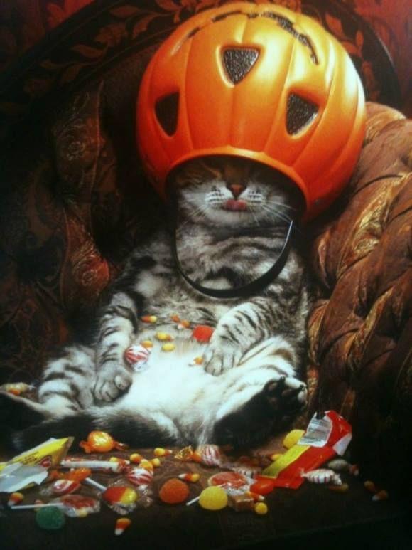 cat trick of treat