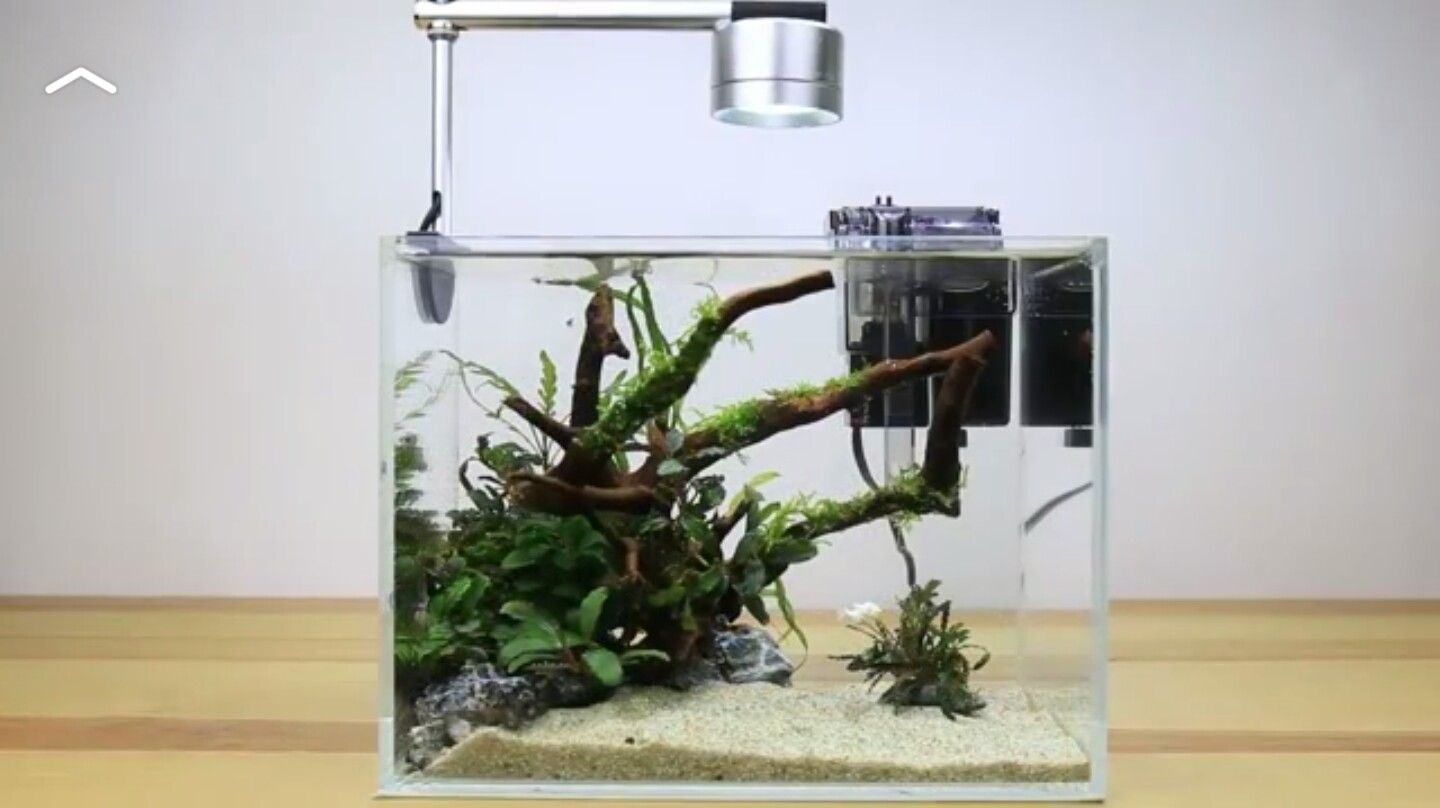 Aquascape Ideas Nano Aquascape Simple