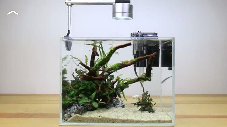Buce Plants Demo Of A Simple Aquascape Aquascape Nano Tank Aquascape Aquarium