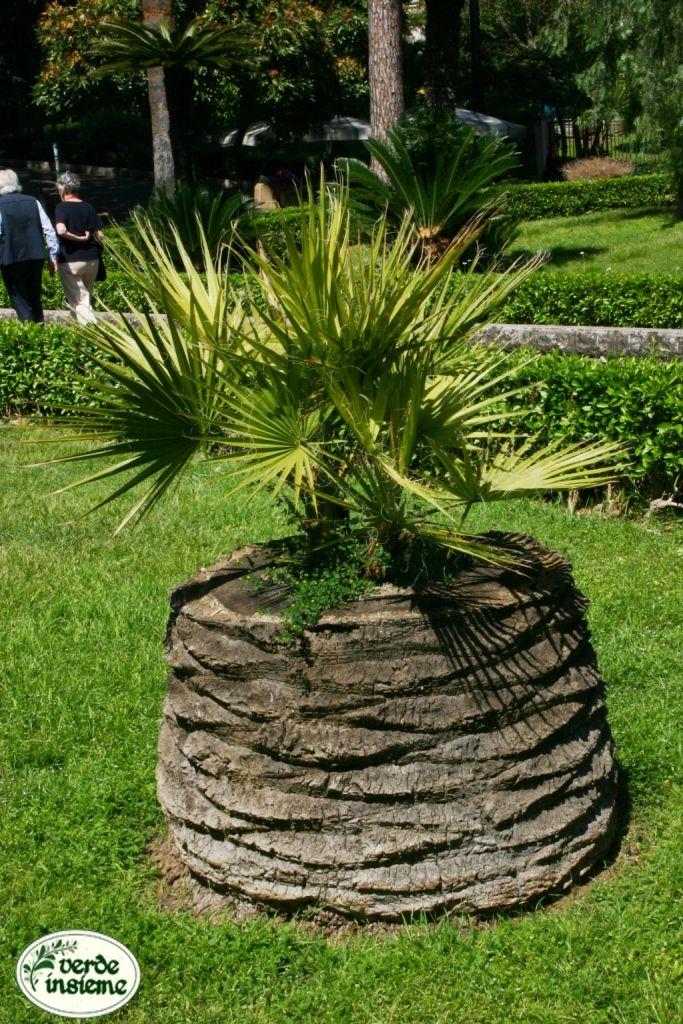 Creare una fioriera da un tronco d 39 albero abbattuto 20 for Albero per piccolo giardino