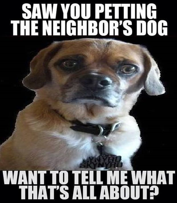 Saw You Petting The Neighbor S Dog Happy Birthday Pictures Happy Birthday Quotes Funny Happy Birthday Meme