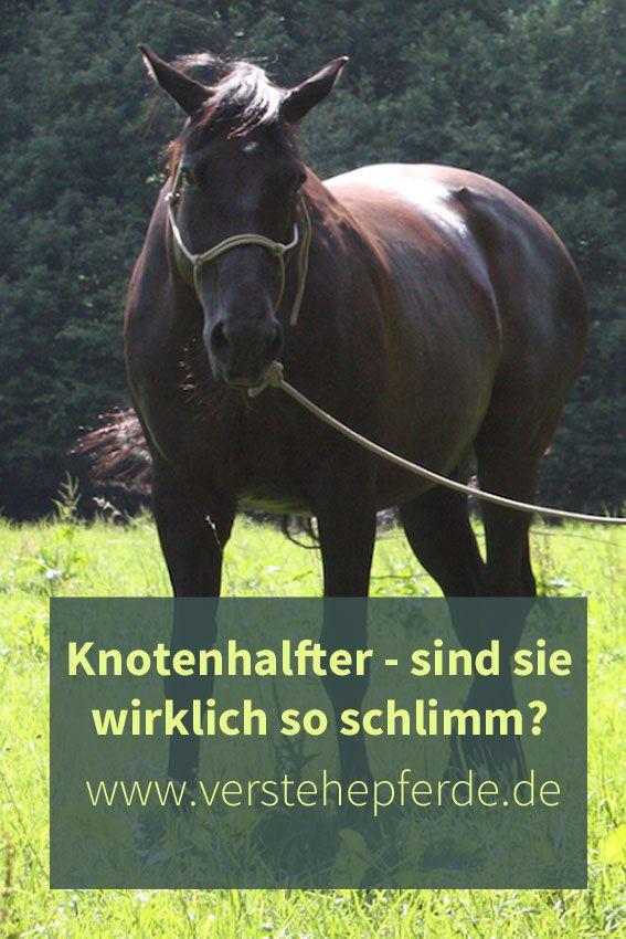 Pfergo Liebe Kennst Du Schon Unser Projekt Pfergo Akademie Nein Dann Wird Es Hochste Zeit Denn Wir Habe Pferde Training Training Ideen Bodenarbeit Pferd