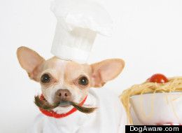 Look Chef S Hats Make Pets Grumpy Puppy Costume Puppy Food