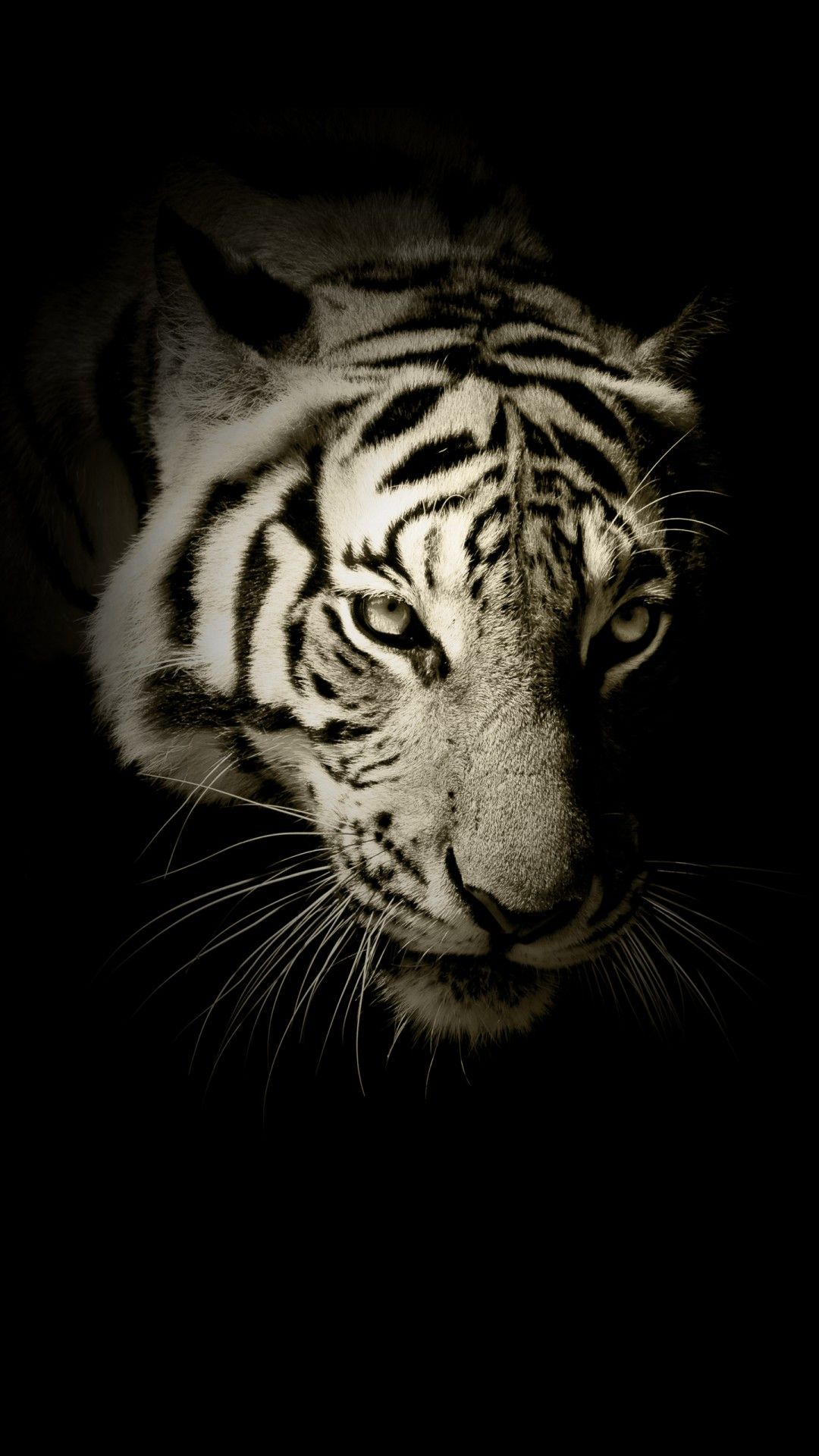 Black And White Tiger Phone Wallpaper In 2020 Tiger Quotes Animal Wallpaper Beast Quotes
