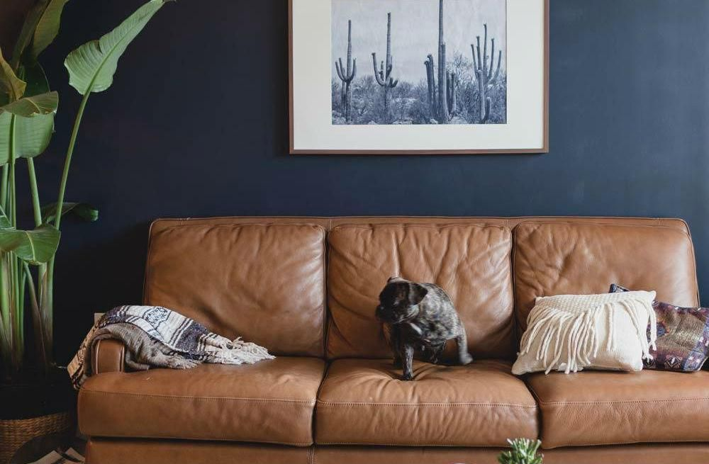 Leren Blauwe Bank.Pin Van Grayson Noggle Op Modern Home Blauwe Woonkamer