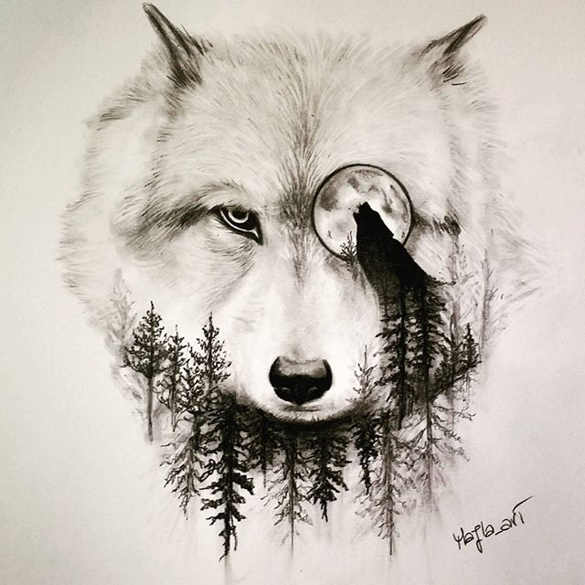 wolf drawing art pencil on Instagram | a r t | Pinterest | Tattoo ...