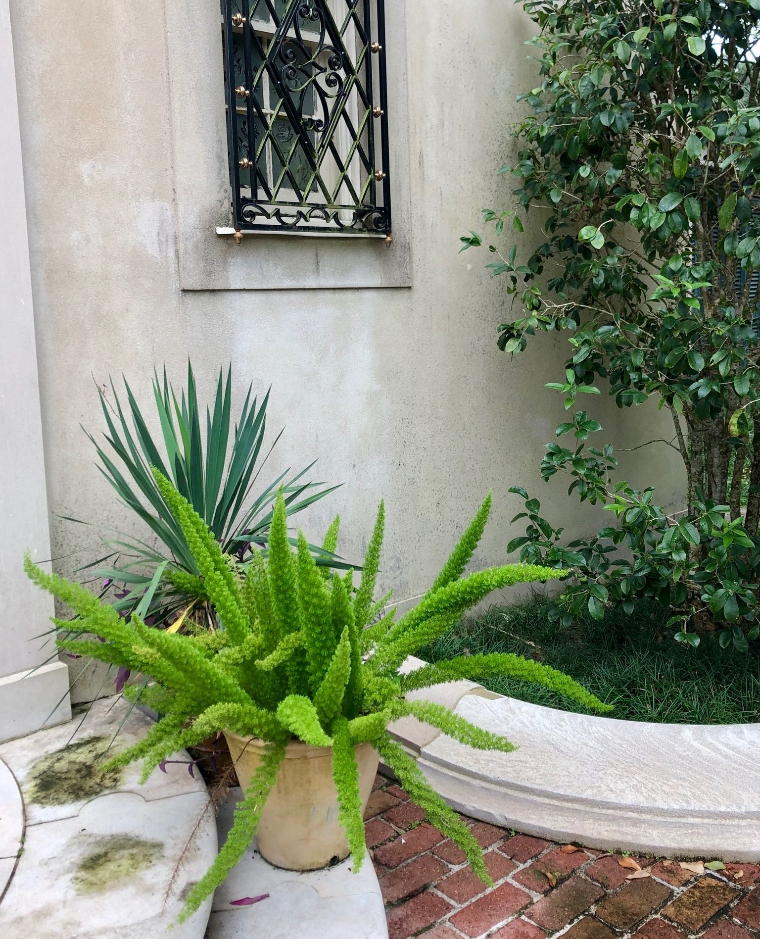 A touch of greenery (or a whole host of plants!) can do wonders to quickly update any outdoor space. We are particularly fond of Dracaena plants, Boston Ferns, Elephant ears, and Staghorn Ferns to add a bit of lush color to your garden! 🌱  Curious about how we can quickly refresh your home and outdoor living space? Email us at susan@susancurriedesign.com #interiordesign #design #susancurriedesign #inspire #luxuryliving #houseenvy #neworleansinteriors #neworleansinteriordesign