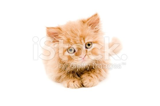 cute cat - Stock image