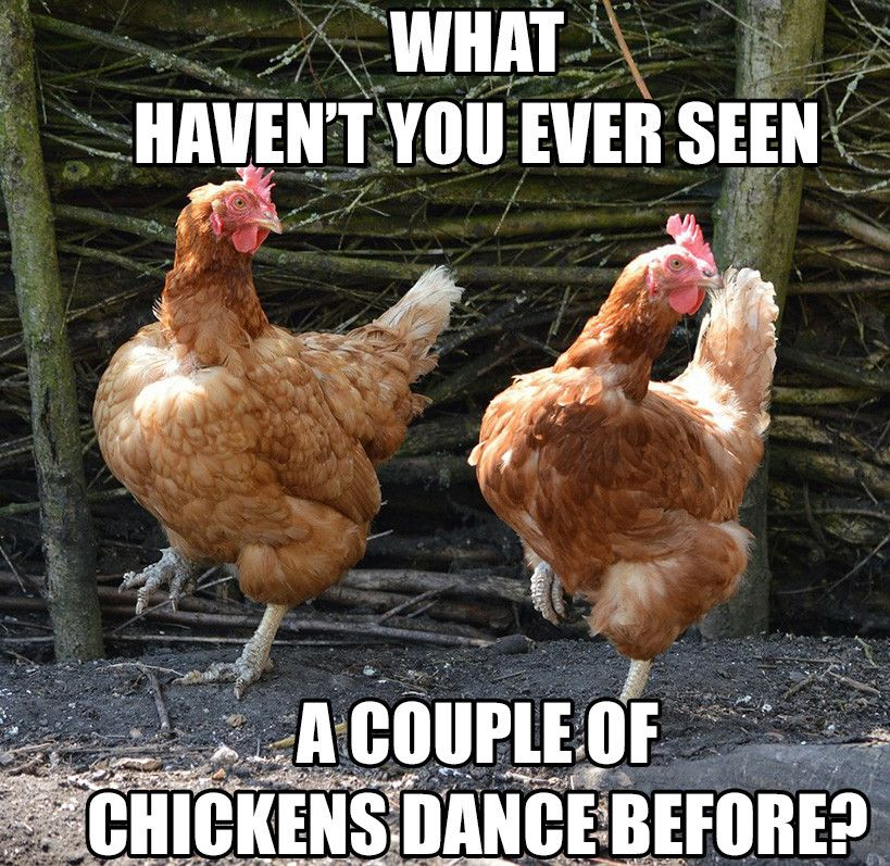 Pin By Tracey Speke On Lovin The Job Chicken Gifts Dancing Animals Chickens