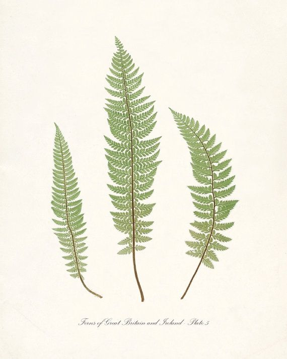 Vintage Botanical  Ferns of Britain and by HighStreetVintage, $15.00