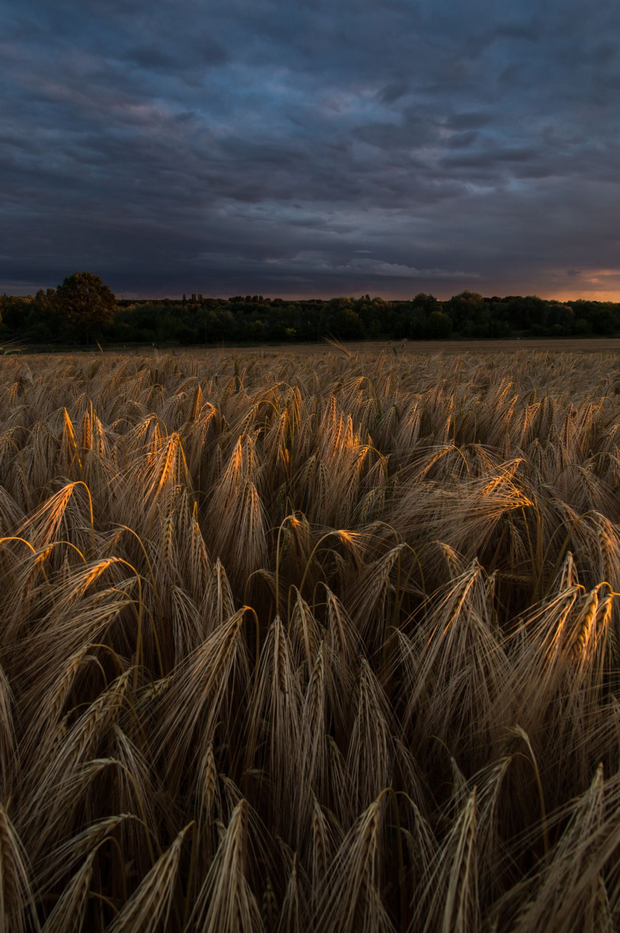 Last light by Denny Bitte - #cornfield #landscape #on #original #photographers #sunset #tumblr