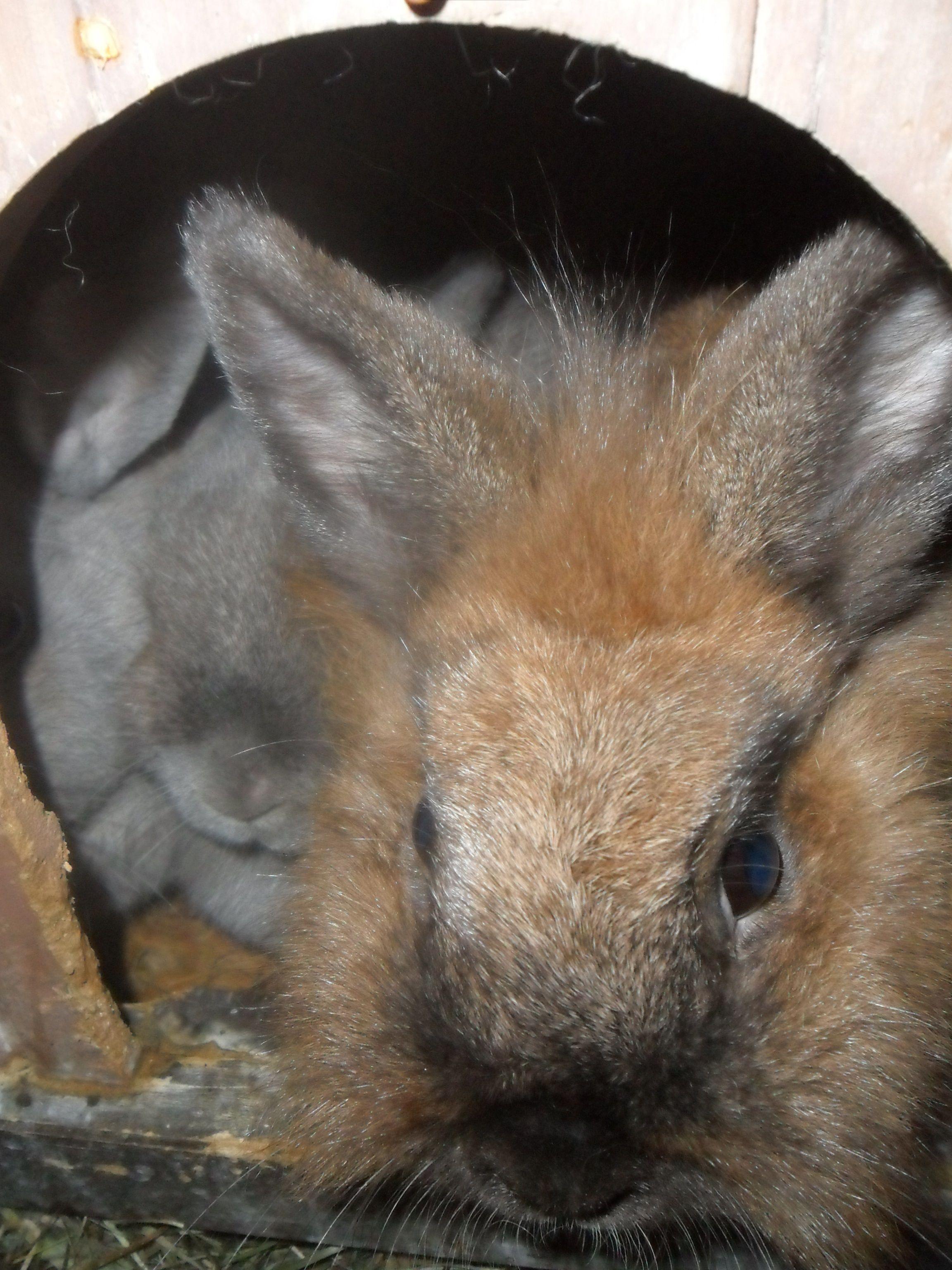 Schau raus aus dem Kaninchen-Haus!