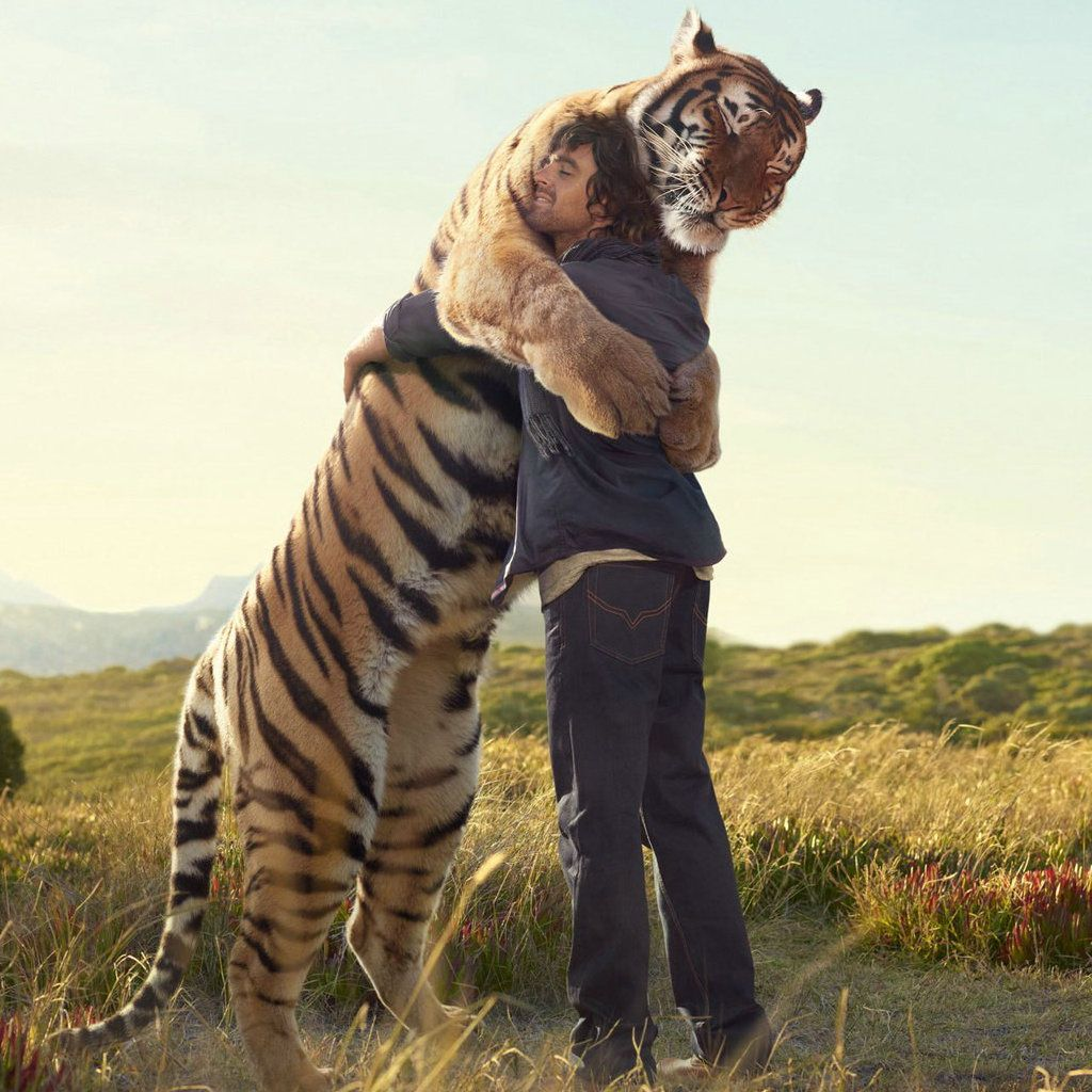 the warm hug with the huge tiger iPad Wallpaper Download