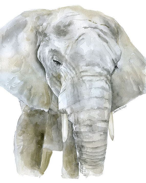 Elephant Watercolor Painting Print 11 X 14 Reproduction Giclee