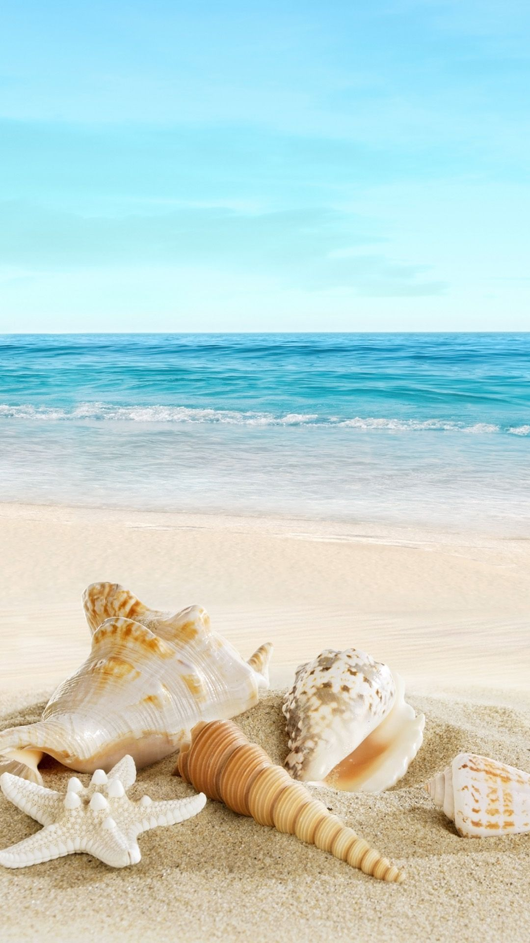 Nature Sunny Sea Shell Beach iPhone 6 wallpaper Color