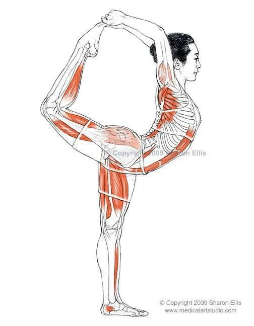 5 Stretches to Beat Back Pain | Yoga anatomy, Dance poses and Anatomy