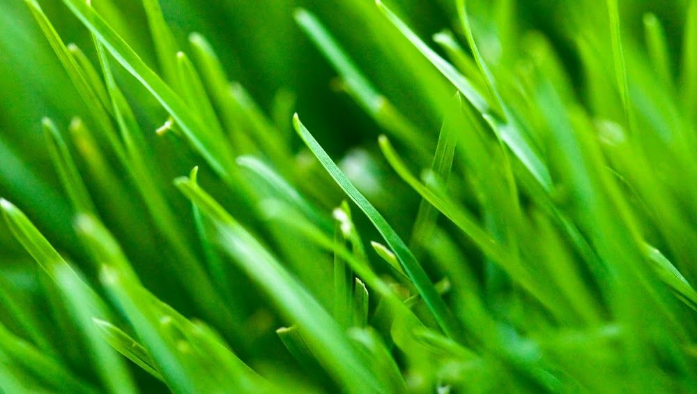 Cover photo with images lawn fertilizer lawn care