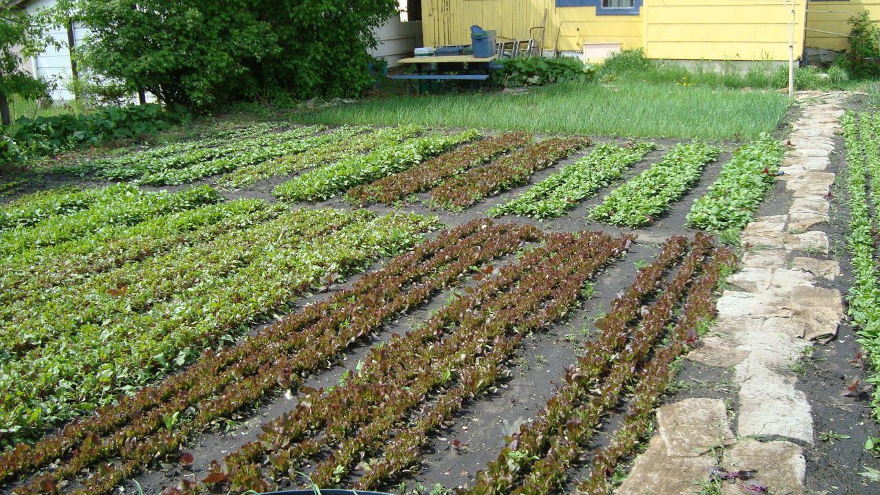Spin Farming Backyard Garden Design Farm Growing Food 400 x 300