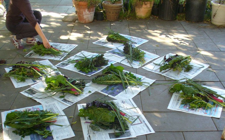 LA Garden Blog : Month By Month Planting Guide for Southern California: A 'Cheat Sheet'