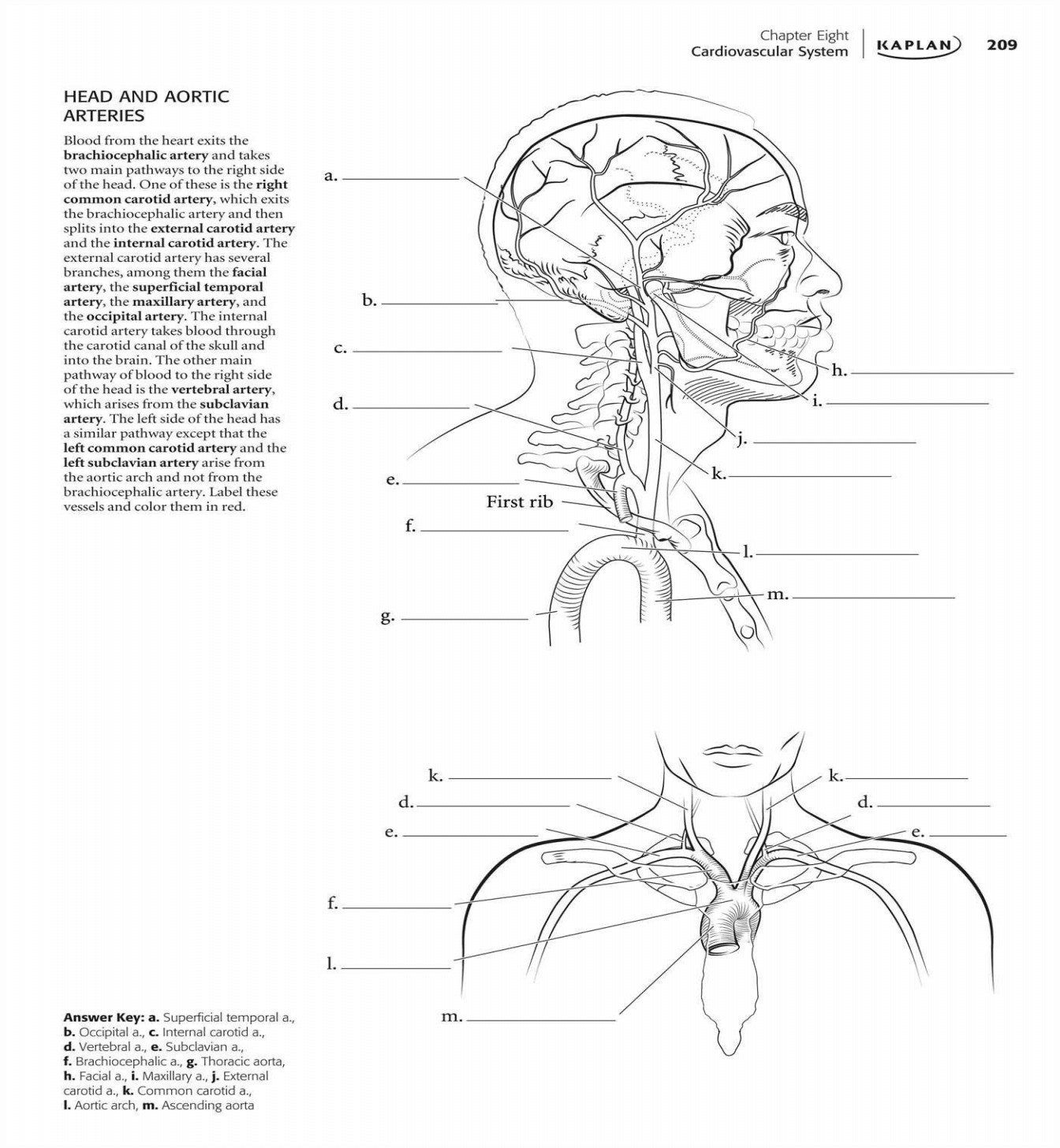 Anatomy And Physiology Coloring Workbook Answer Key Unique Anatomy Picture Steven Hill Anatomy Coloring Book Drawing Book Pdf Coloring Book Pages