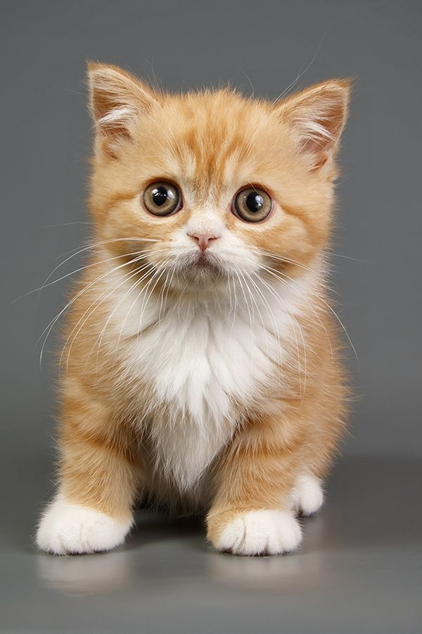 Cute red kitten +7 Pics with other cute animals