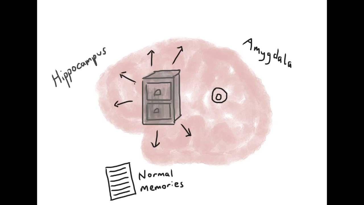 Brain Model Of Ptsd Psychoeducation Video Tf Cbt Pinterest