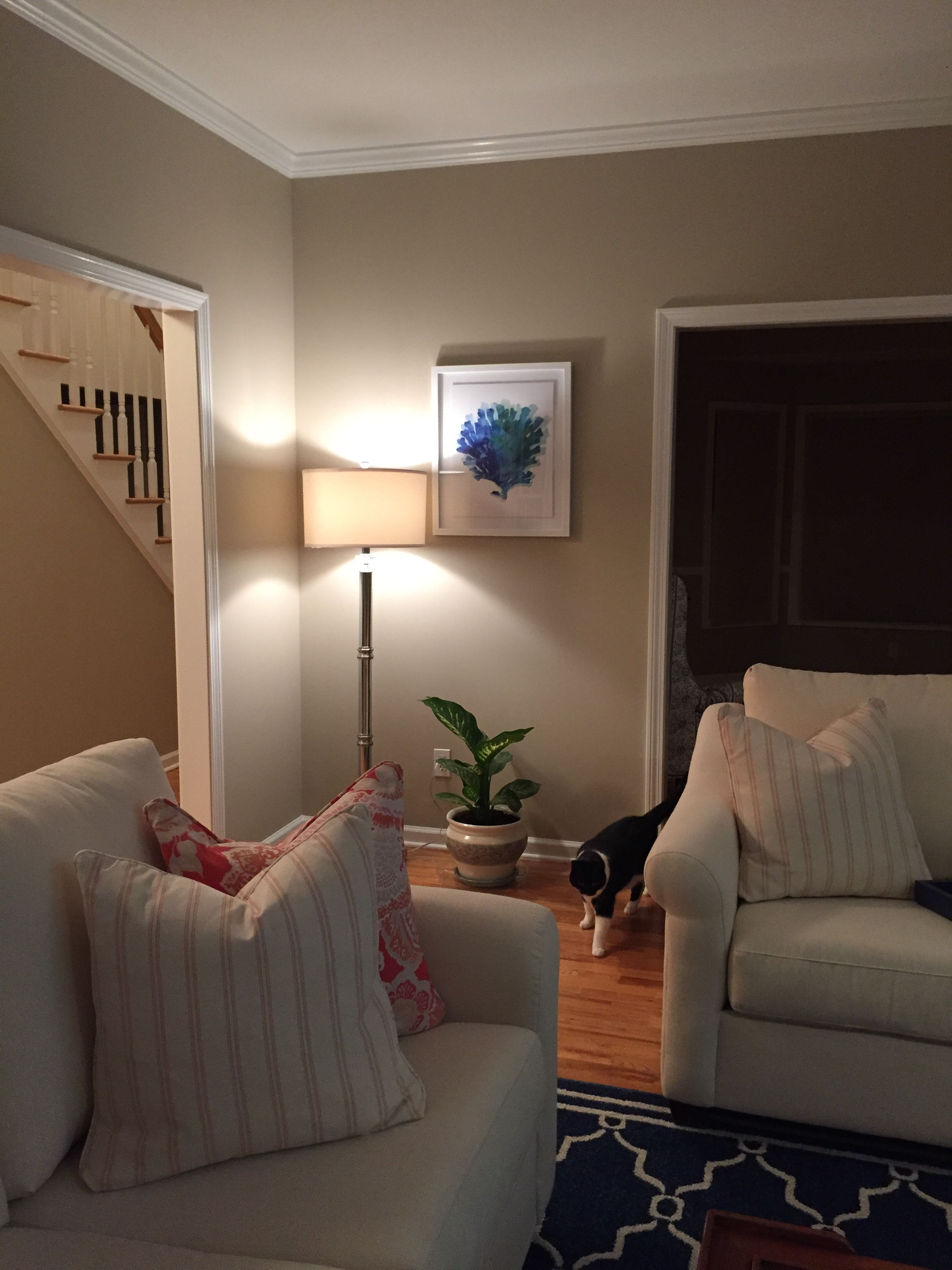 Ashen Tan By Benjamin Moore We Love How The Color Turned Out