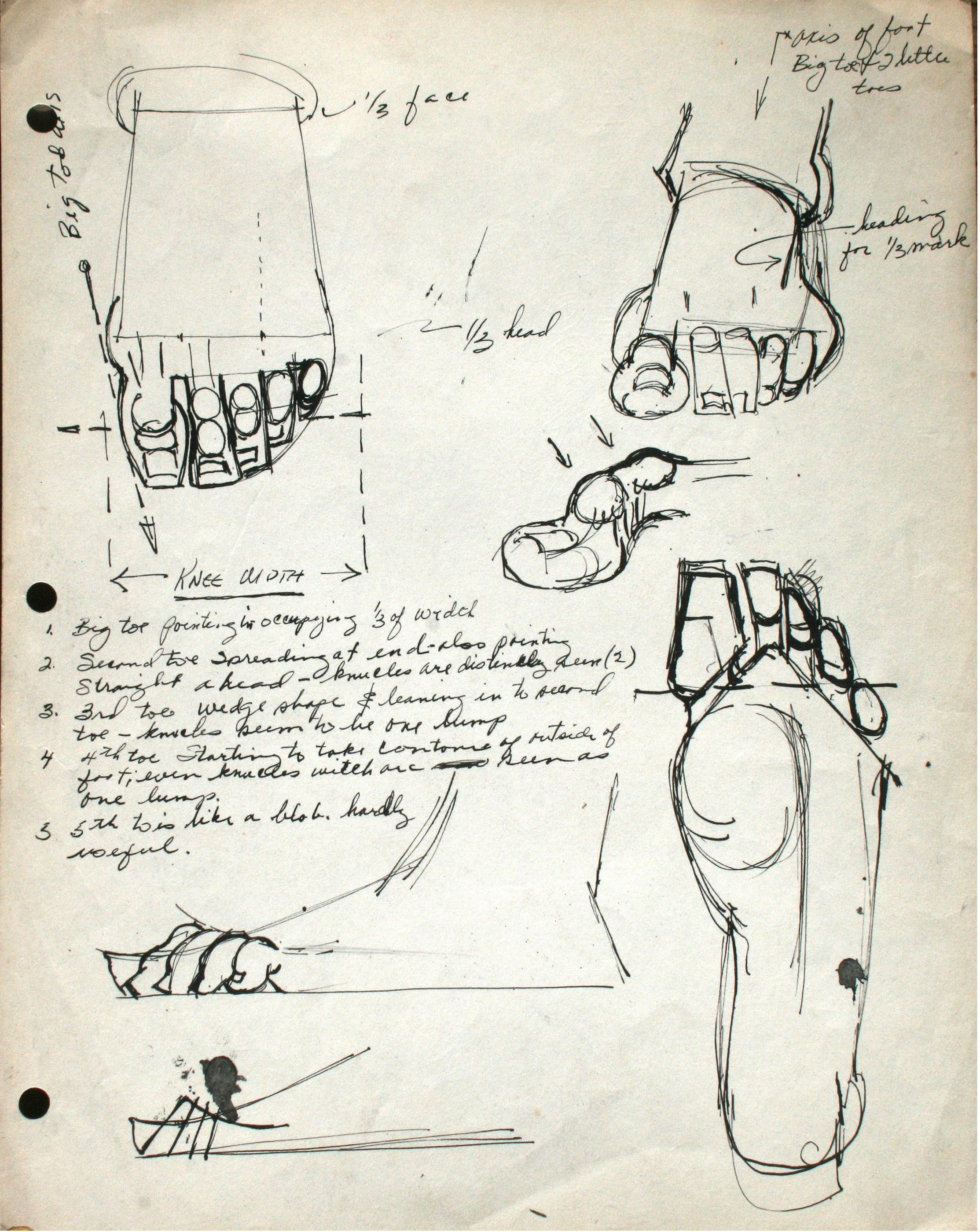 Bonito Repo Zydrate La Anatomía ópera Genética Imágenes - Anatomía ...