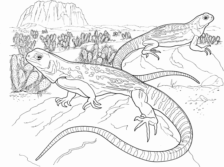 Bearded Dragon Coloring Page Fresh Free Lizard Coloring Pages In 2020 Animal Coloring Pages Dragon Coloring Page Animal Coloring Books