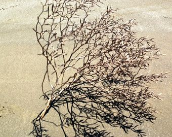 ink drawing tumble weed   Sun Dried Beach Bush, Tattoo?
