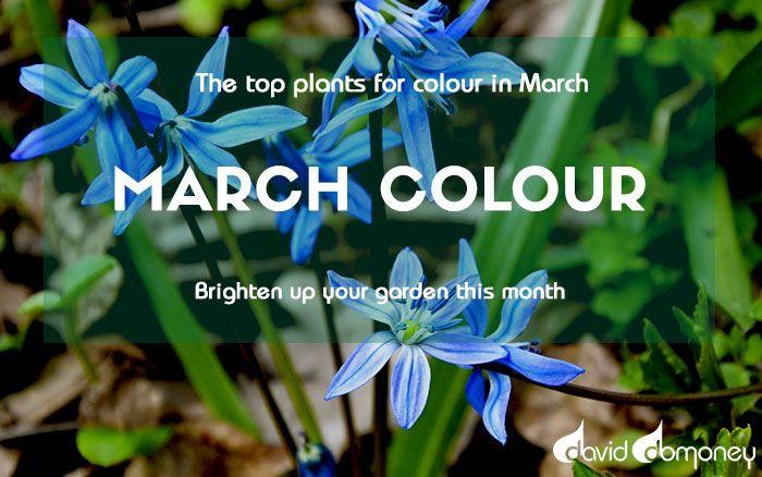 Gardening Calendar Top 3 Gardening Jobs For March In 2020
