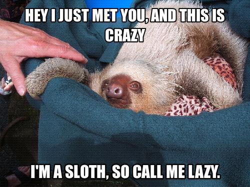 Sloth Meme Sloth Jun 08 08 20 Utc 2012 Sloth Meme Funny Sloth Meme Cute Baby Sloths