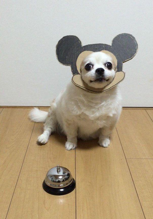 Cardboard Costume Diy Dog Toys Pet Costumes Diy Dog Stuff