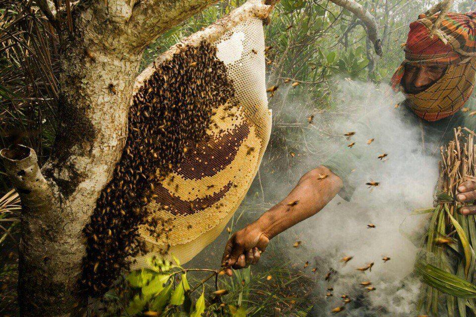 #themadhoney #madhoney #nepal #nepalhoney #honeyhunters #psyhodelic #gurungs #himalayas #honey #honeybees #mountain #secret