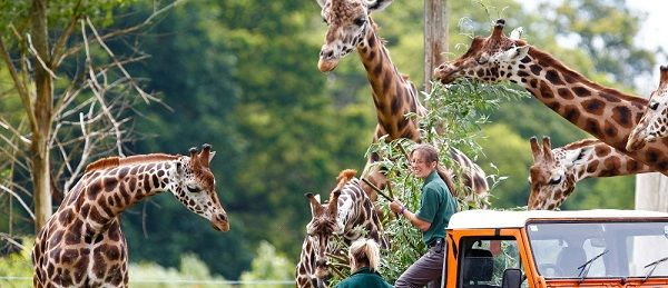 Have you ever visited Woburn Safari Park? Are you finding cheap tickets or children's tickets for Woburn Safari Park? #WoburnSafariPark #cheaptickets #Kidstickets #savemore