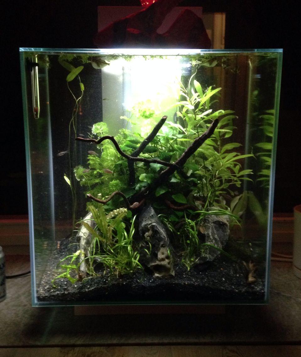 My Own Fluval Edge After Running For 4 Monthd Fresh Water Fish Tank Aquarium Fish Tank Fish Tank