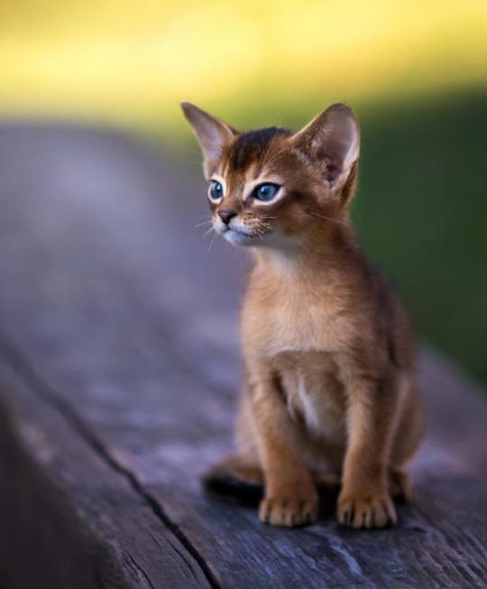 Www Majaempfiehlt De Cats Catlovers Funnycats Katzen Majaempfiehlt Www Majaempfiehlt De In 2020 Haustiere Wilde Katzen Tiere