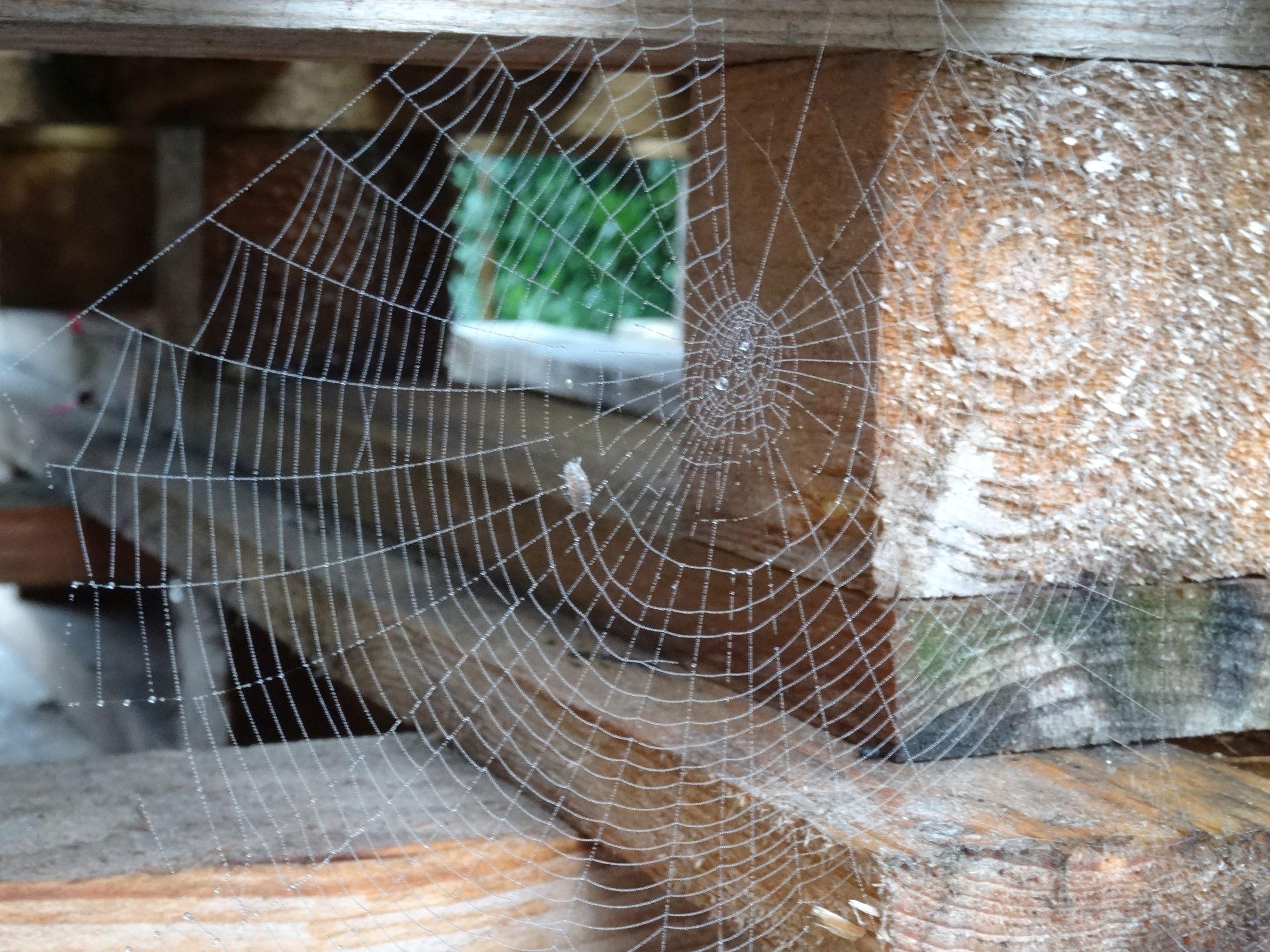 toile d'araignée | toiles et araignées / spiders and webs