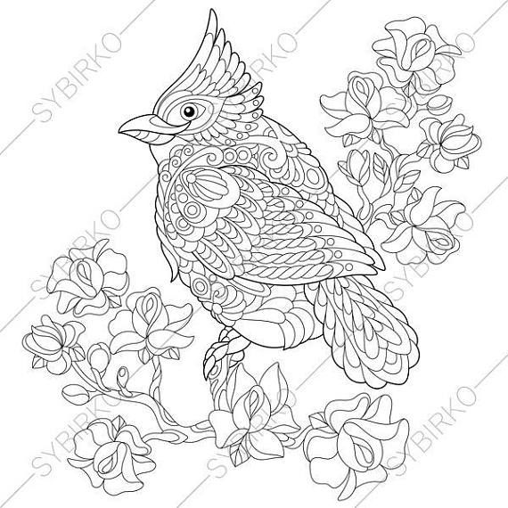 Adult Coloring Pages Northern Cardinal Bird Zentangle Doodle