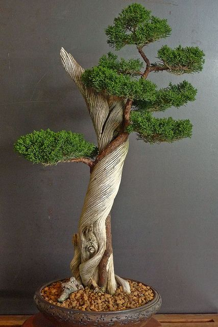 Bonsai Wallpaper : bonsai, wallpaper, Iphone, Bonsai, Tree,, Japanese