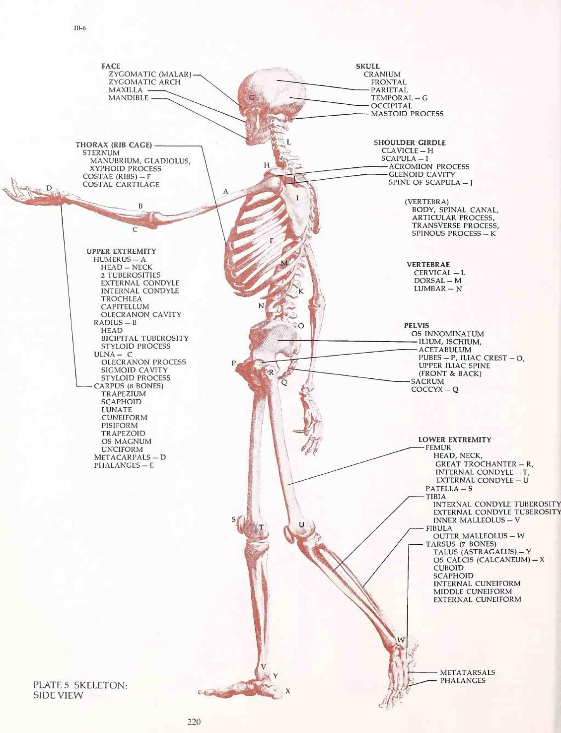 HUMAN ANATOMY AND FIGURE DRAWING | anatomy | Pinterest | Human ...