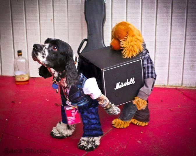 Hilarious Doggy Costume Roadies Carrying A Marshall Amp Best