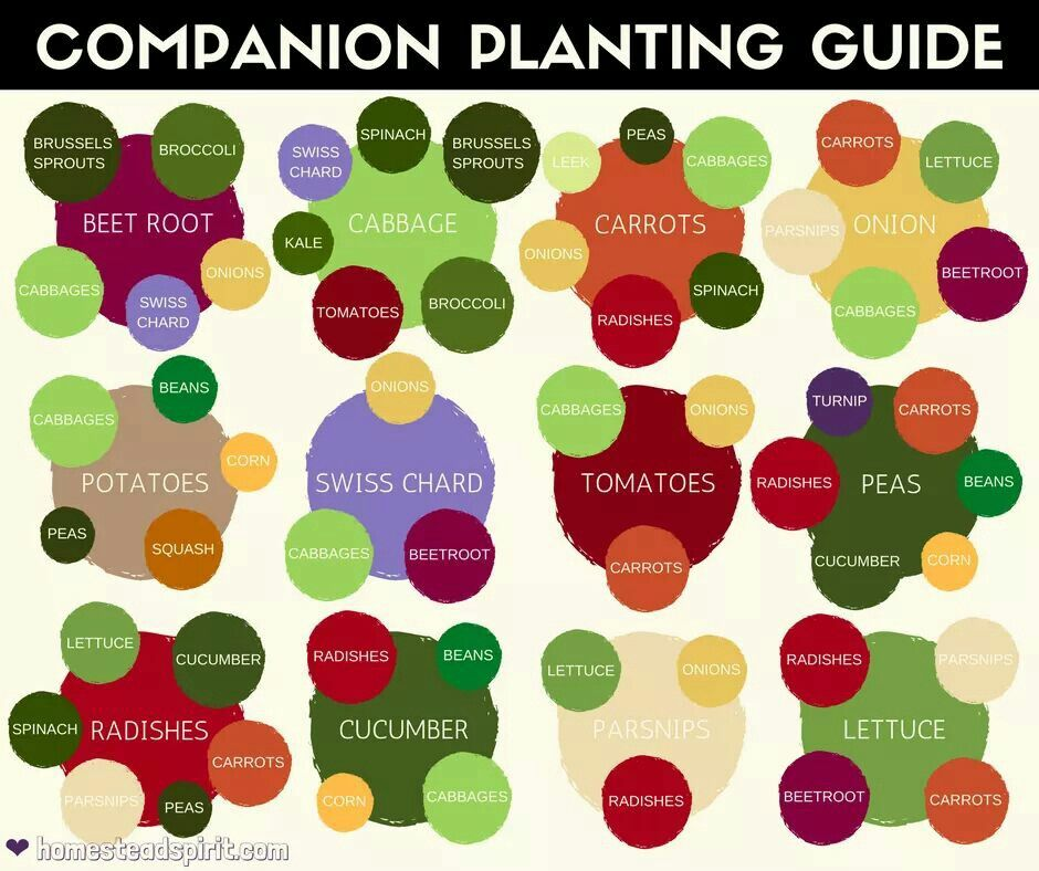 Pin by Covert Creations on Gardening  outdoors Companion planting