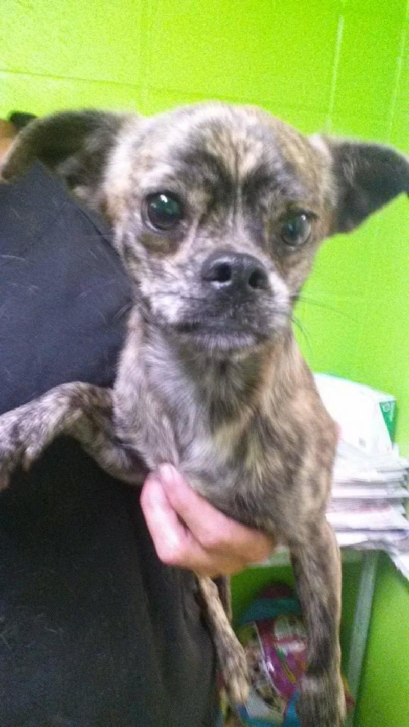 Adopt Mason on Animal shelter, Animals, Pets