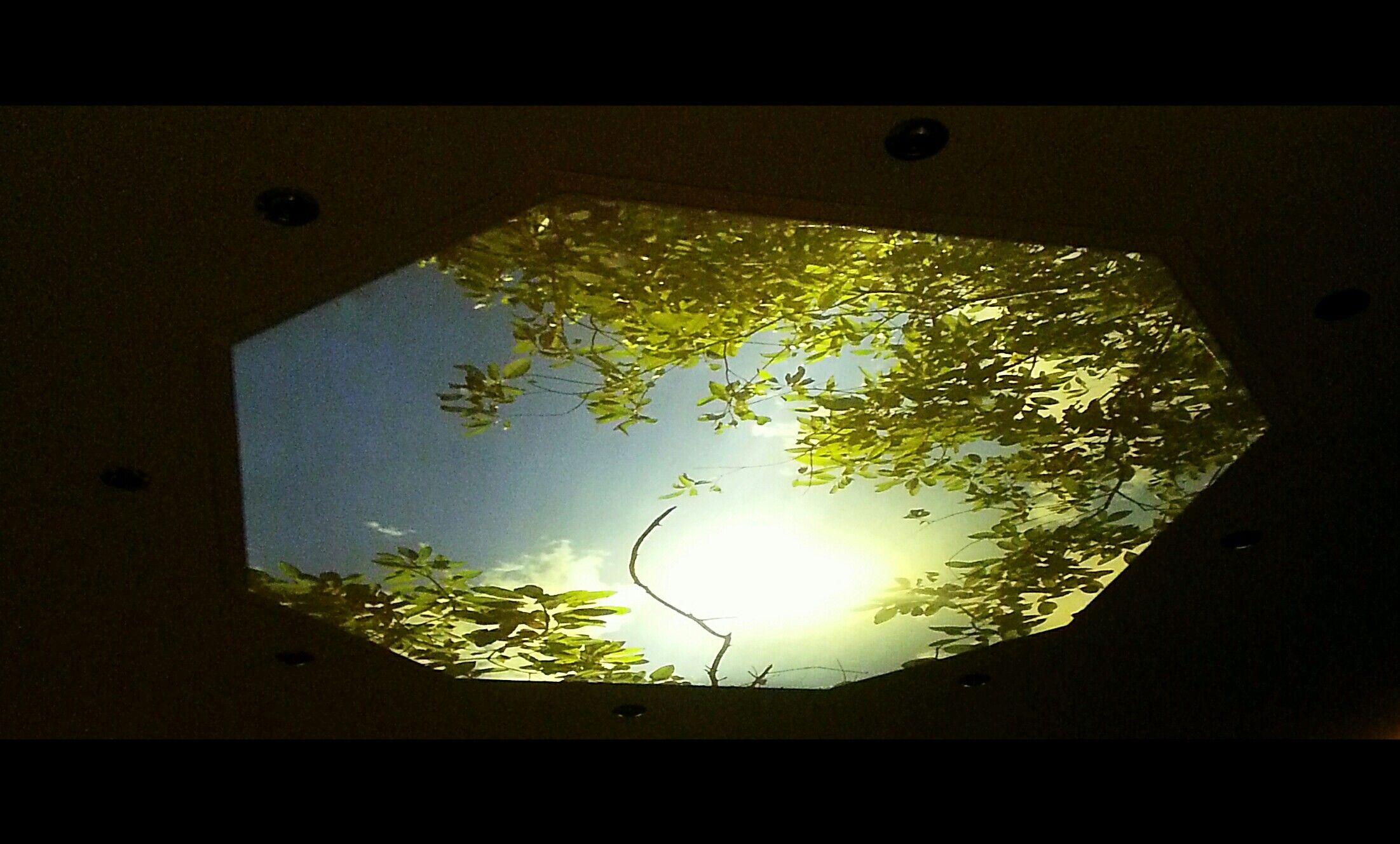 Deckenbild Mit Individueller Gestaltung Himmel Und Blattern Von Unten Beleuchtet Deckchen Beleuchten Bilder