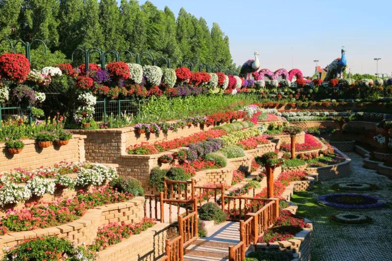 Dubai Miracle Garden 2016 A desert oasis of 45 million