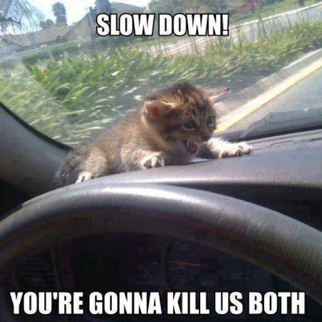 Aww poor kitty