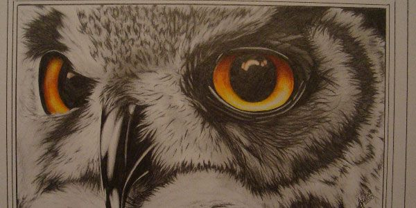 Owl Eye 50 Splendid Pencil Drawings Owls Drawing Owl